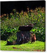 Chickens Of The Corn Canvas Print