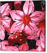 Chihuahua Flower Canvas Print