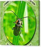 Child Kid Birthday Greeting Card - Lightning Bug Canvas Print