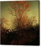 Chinaberry At Sunset Canvas Print
