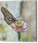 Chinese Butterfly Canvas Print