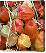 Chinese Lantern Flowers Canvas Print