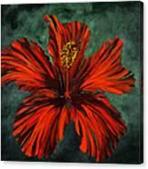 Chinese Rosa Canvas Print