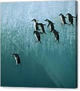 Chinstrap Penguin Pygoscelis Antarctica Canvas Print