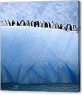Chinstrap Penguins Lined Canvas Print