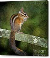 Chipmunk In The Forest Canvas Print