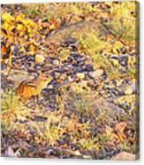 Chipmunk V1 Canvas Print