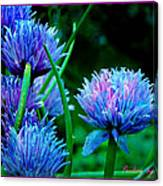 Chives For You Canvas Print