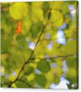 Chlorophyll Daydream Canvas Print