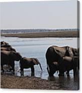 Chobe Elephants Canvas Print
