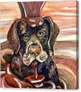 Chocolate Lab Canvas Print