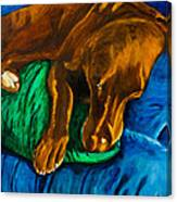 Chocolate Lab On Couch Canvas Print