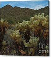 Cholla On The Mountainside Canvas Print