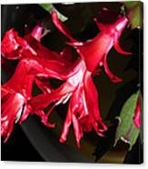 Christmas Cactus Trio Canvas Print
