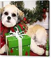 Christmas Portraits - Shihtese Canvas Print