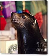 Christmas Sea Lion Canvas Print