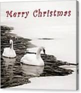 Christmas Swans 2367 Canvas Print