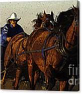 Rodeo Chuckwagon Racer Canvas Print
