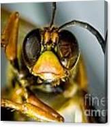 Cicada Killer Canvas Print