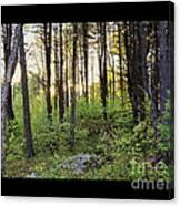 Cinematic Style Back Woods At Sunset Canvas Print