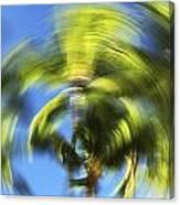 Circular Palm Blur Canvas Print