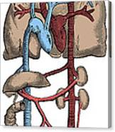 Circulatory System Canvas Print