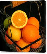 Citrus Fruit Basket Canvas Print