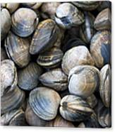 Clam Shell Background Canvas Print