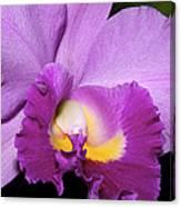 Classic Purple Orchid Canvas Print