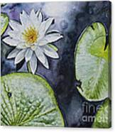 Clearwater Lilly Canvas Print