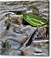 Clearway Creek Canvas Print