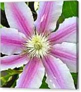 Clematis Blossom Canvas Print