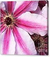 Clematis Close Up Canvas Print