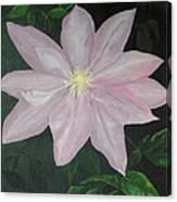 Clematis Canvas Print
