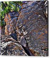 Climbing Rocks And Trees Canvas Print