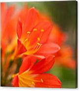 Clivia In The Conservatory Canvas Print