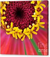 Close Up Dahlia Canvas Print
