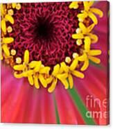 Close Up Dahlia Canvas Print