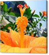 Close Up Of A Rose Mallow Canvas Print