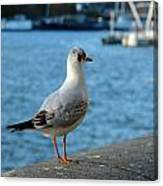 Close Up Of A Tern Next To The Thames And London Eye Canvas Print