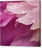 Close-up Of Pink Flower Canvas Print