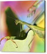 Close-up Of Praying Mantis Canvas Print