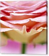 Close Up Of Rose Showing Petal Detail Canvas Print