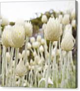Close Up Of Spiked Flowers Canvas Print