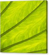 Close-up Of Surface Of A Green Leaf Canvas Print