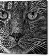 Close Up Portrait Of A Cat Canvas Print