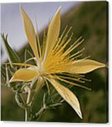 Close-up View Of A Blazing Star Canvas Print