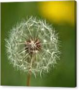 Close View Of A Dandelion Gone To Seed Canvas Print
