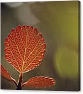 Close View Of A Leaf Canvas Print