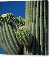 Close View Of A Saguaro Cactus Saguaro Canvas Print